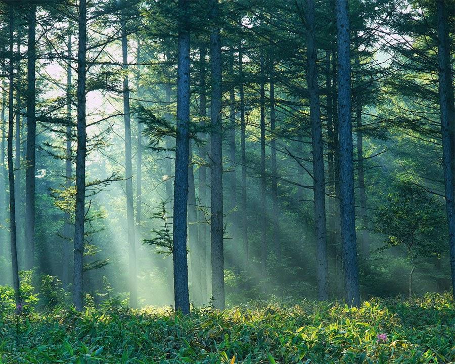 Malvorlagen Wald Kostenlos - Malvorlagen zum Ausdrucken Ausmalbilder Wald kostenlos 1