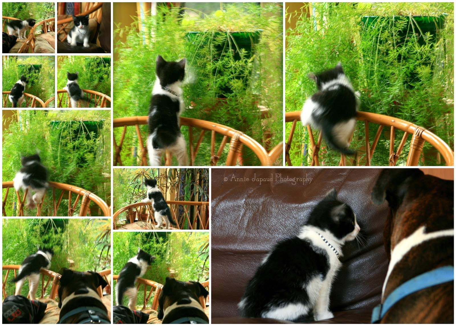photo collage of kitten attacking a plant