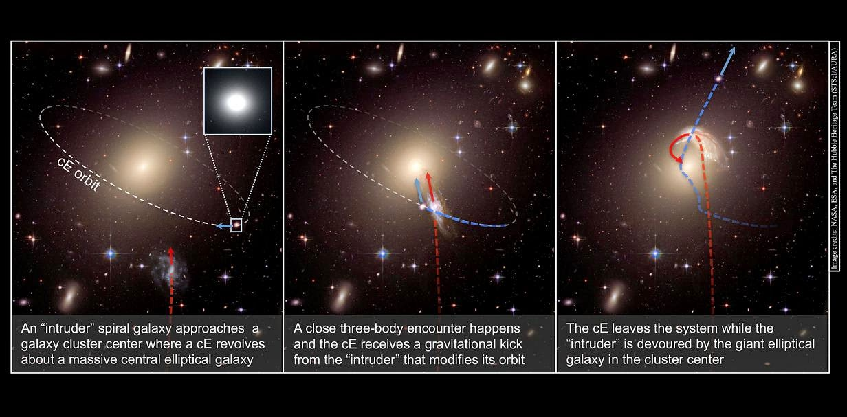 "This schematic illustrates the creation of a runaway galaxy. In the first panel, an ""intruder"" spiral galaxy approaches a galaxy cluster center, where a compact elliptical galaxy (cE) already revolves around a massive central elliptical galaxy. In the second panel, a close encounter occurs and the compact elliptical receives a gravitational kick from the intruder. In the third panel, the compact elliptical escapes the galaxy cluster while the intruder is devoured by the giant elliptical galaxy in the cluster center. Credit: NASA, ESA, and the Hubble Heritage Team"