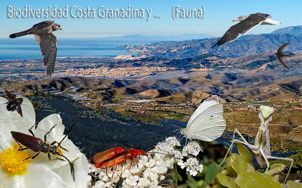 Biodiversidad Costa Granadina y ... (Fauna)