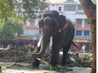 guruvayur chenthamarakshan|Kerala tourism|Kerala elephants|eye images
