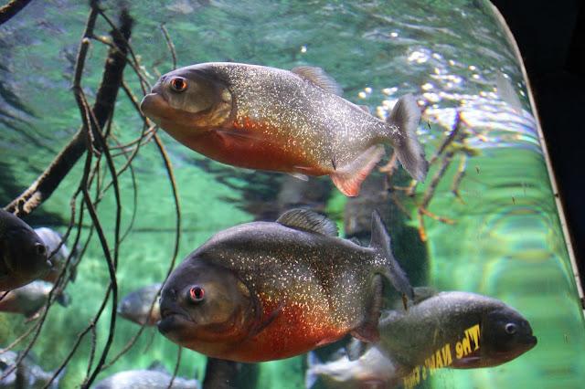 georgina-minter-brown-georgie-frequencies-holiday-bournemouth-birthday-trip-sea-coast-ocean-oceanarium-aquarium-fish-piranha