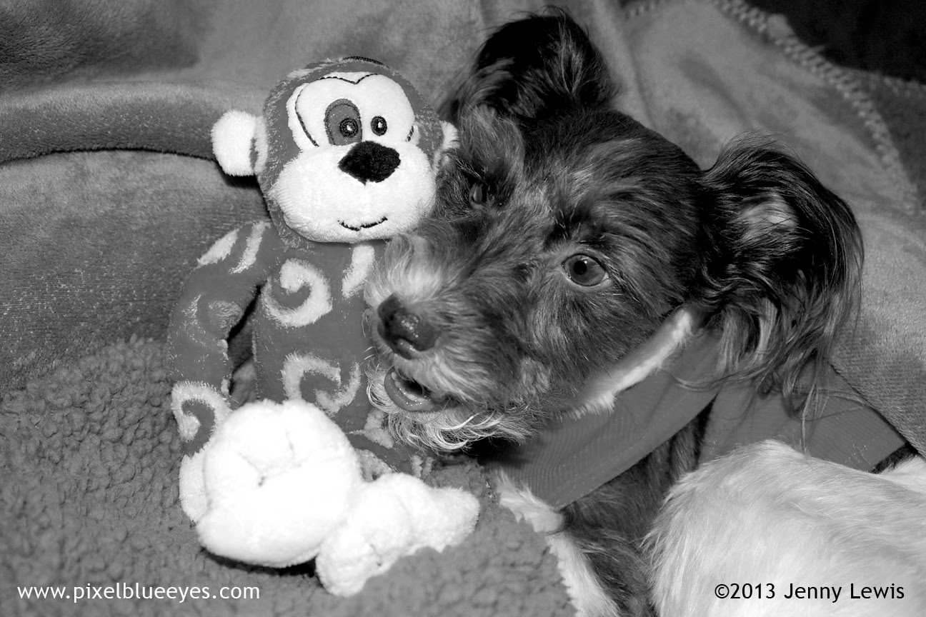 Black & White Photo of Pixel talking with Randolf the Red Eyed Monkey Toy