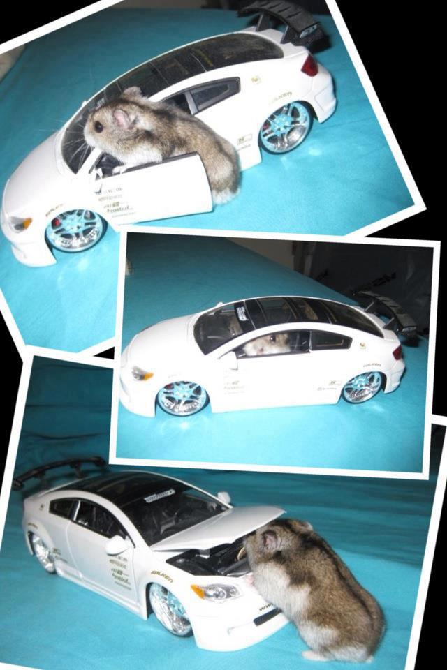 Funny hamster got a new ride, funny hamster picture