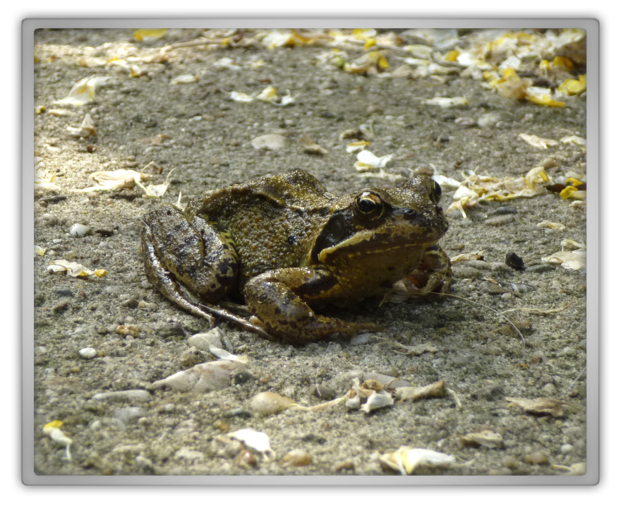 our frog family cute nature sweet spring summer