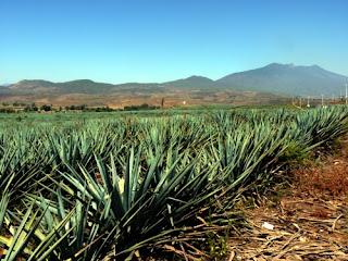 Mexikanische Flora und Fauna