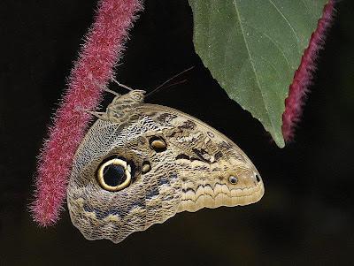 Un fluture