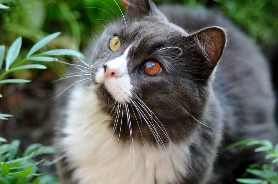 Funny cats - part 158, cute cat picture, best cat photos, cat photo
