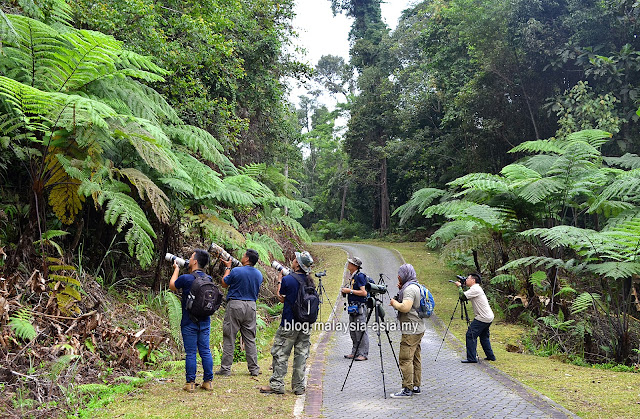 Birdwatching at Fraser's Hill Pahang