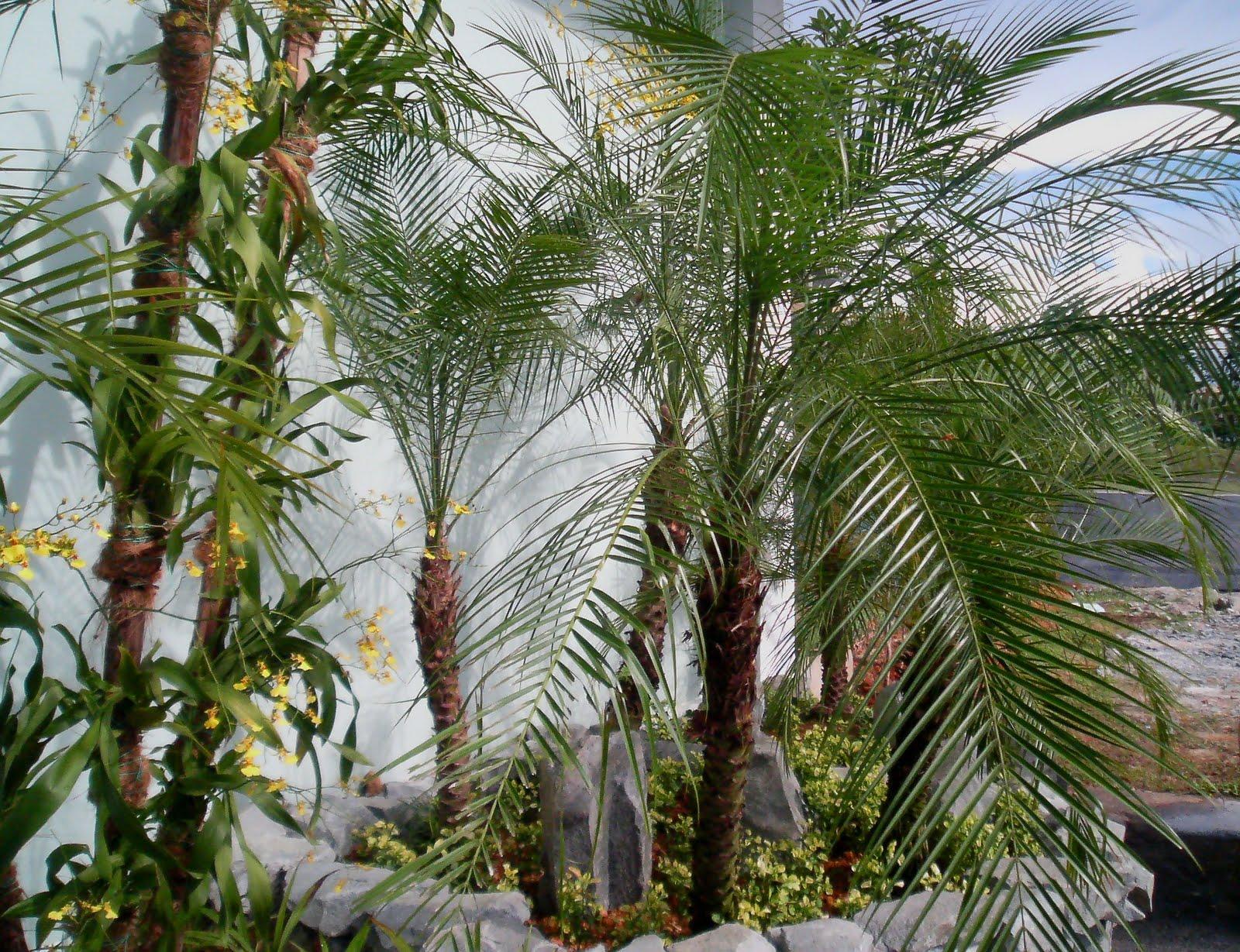 palm fm dating