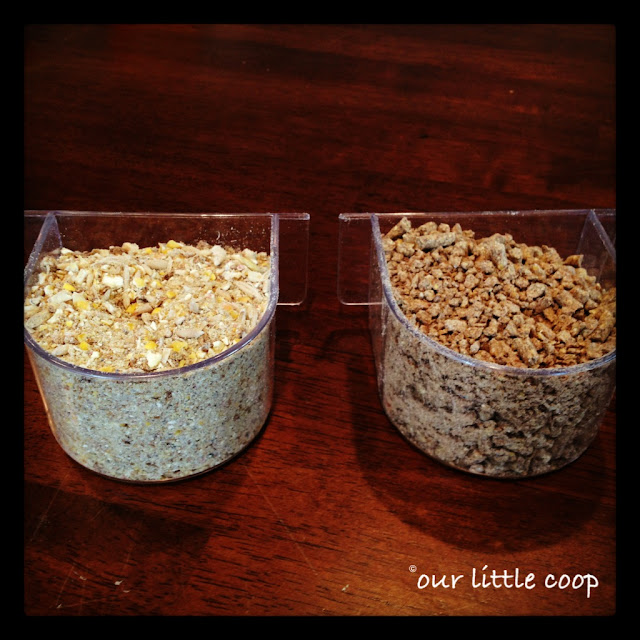 Organic vs. Non-organic chicken layer feed, gmo free