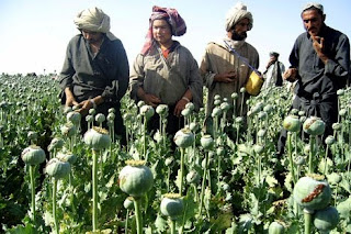 champ de pavot en Afghanistan heroine