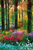 Conserve a natureza e todos seremos felizes!