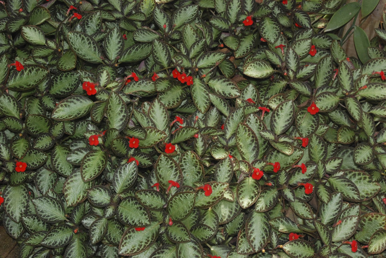 Tropical flowering plants fairchild botanic garden located