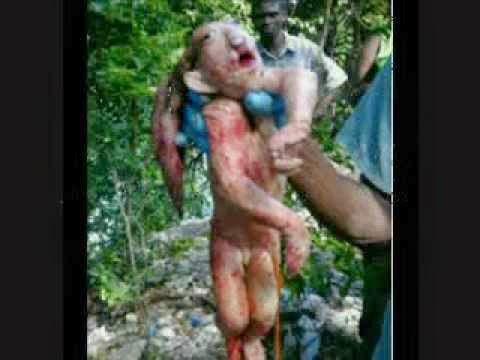Animal estranho foi achado em Manaus