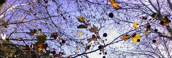 Rete, reticoli, intersezioni per attraversare i sentimenti