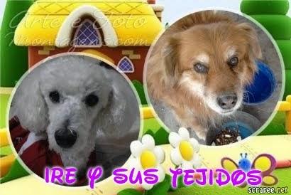 IRE Y SUS TEJIDOS