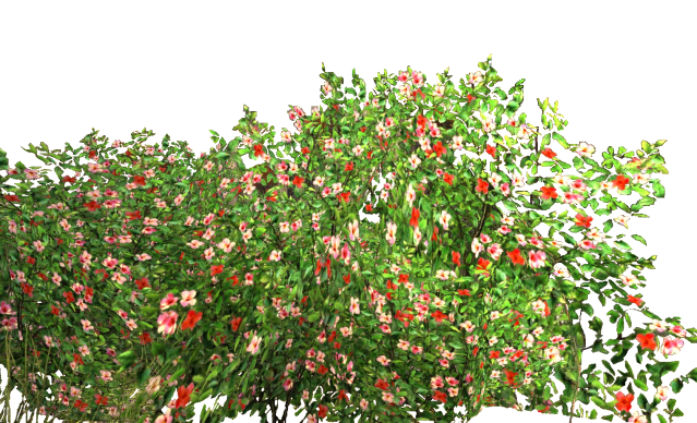 Flower Shrubs Png Rose Bush Png Flowers Garden
