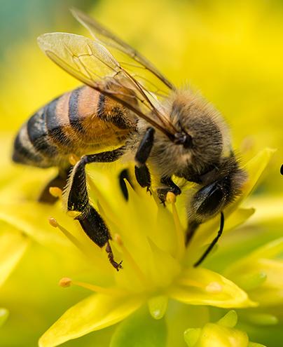 Miel=Santé