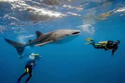 Reserva de la biósfera Tiburón Ballena