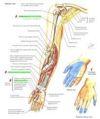 Median nerve (Medial + Lateral cords) | Electrotherapy for MSP