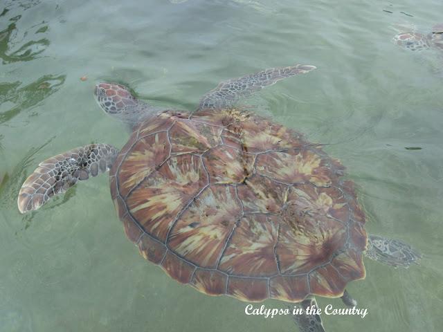 Cayman Islands Turtle Farm Gift Shop
