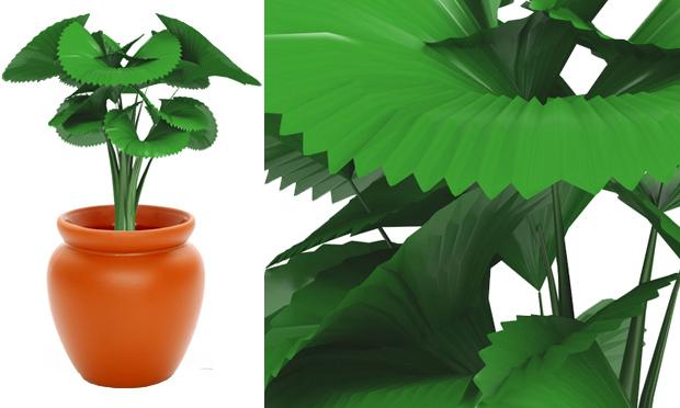 plantas para jardim muito sol:Cura: Plantas de Interiores e seus Efeitos Terapêuticos