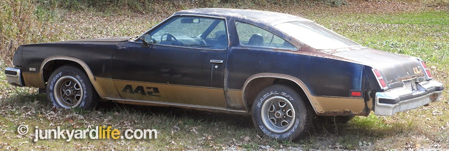 1977 Olds Cutlass 442 found in a yard wearing original Rally wheels, black and gold paint.