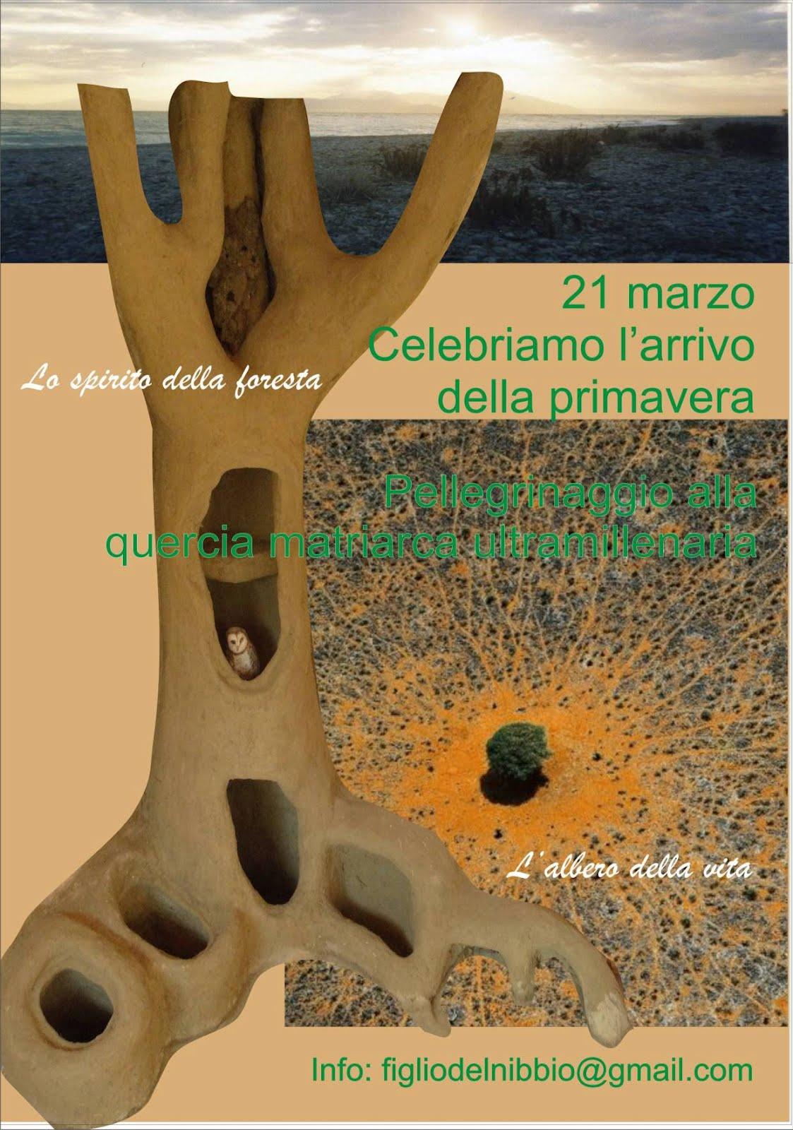 La rete delle reti 21 marzo 2012 pellegrinaggio in for Alberi simili alle querce