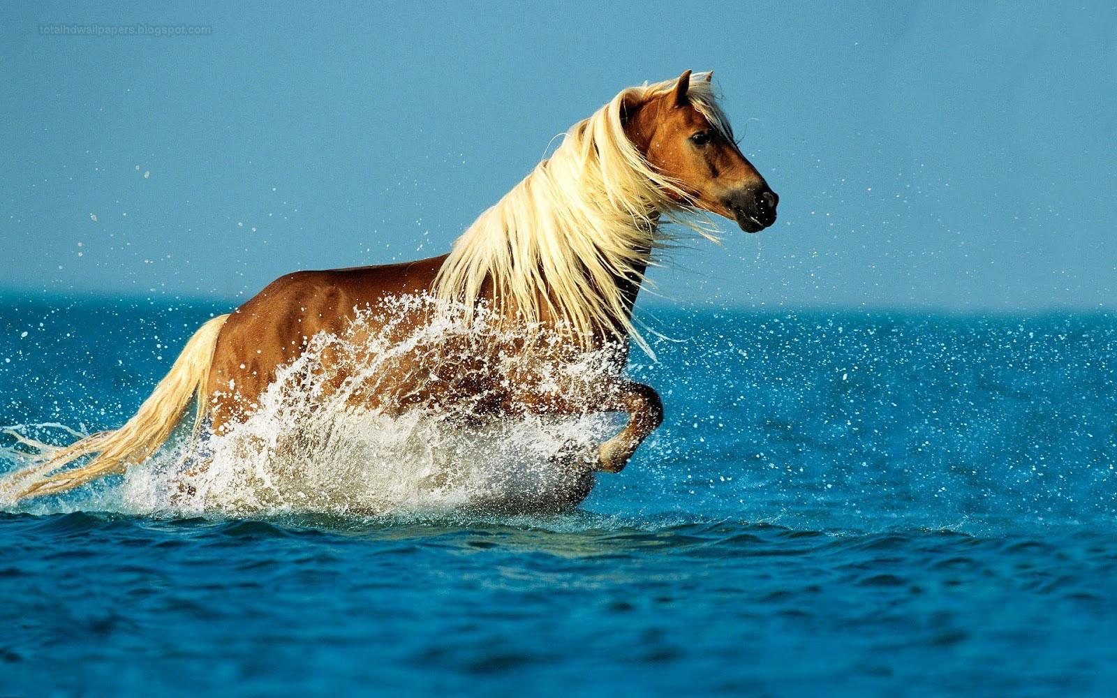 Popular   Wallpaper Horse High Definition - horse+wallpapers+hd+(3)  Trends_866480.jpg