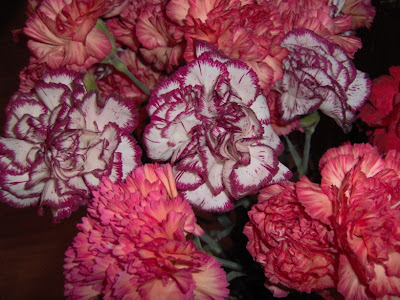 carnations flowers pictures