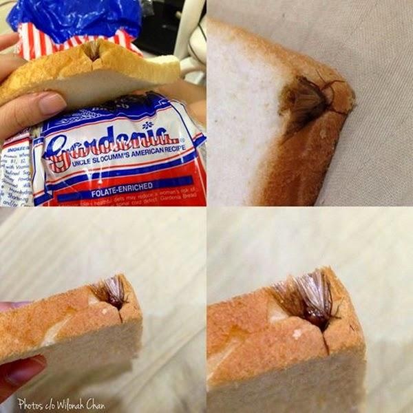 Insect in Gardenia bread