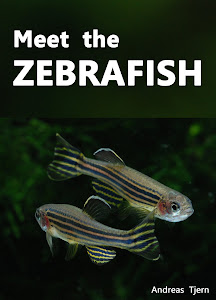 Meet the Zebrafish