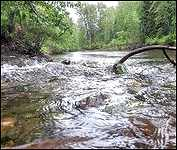 My Bulkley River 4