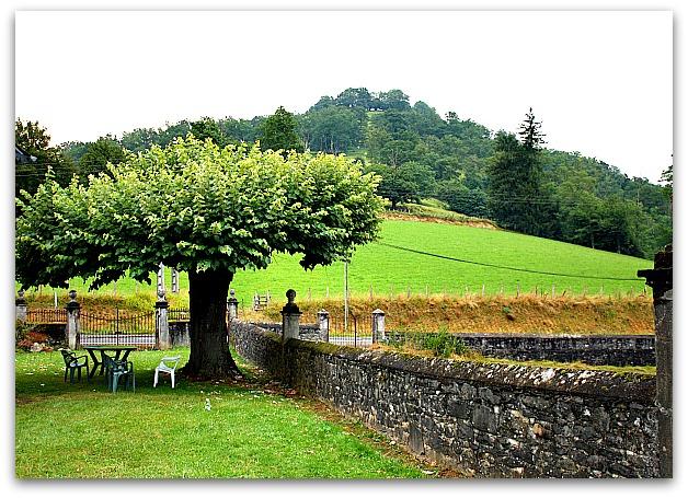 arbre d ombrage pour petit jardin 6 arbres qui sont vraiment adapt s pour un petit jardin. Black Bedroom Furniture Sets. Home Design Ideas