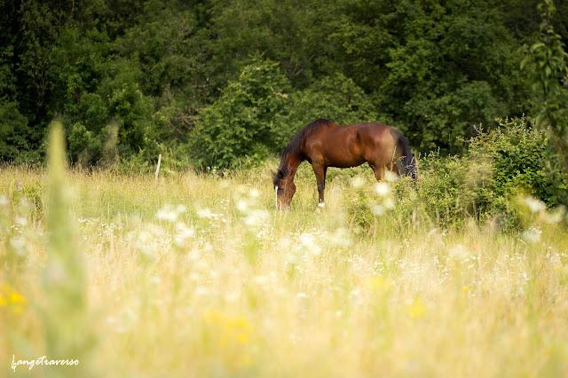 Cheval, prairie en Haute-Savoie