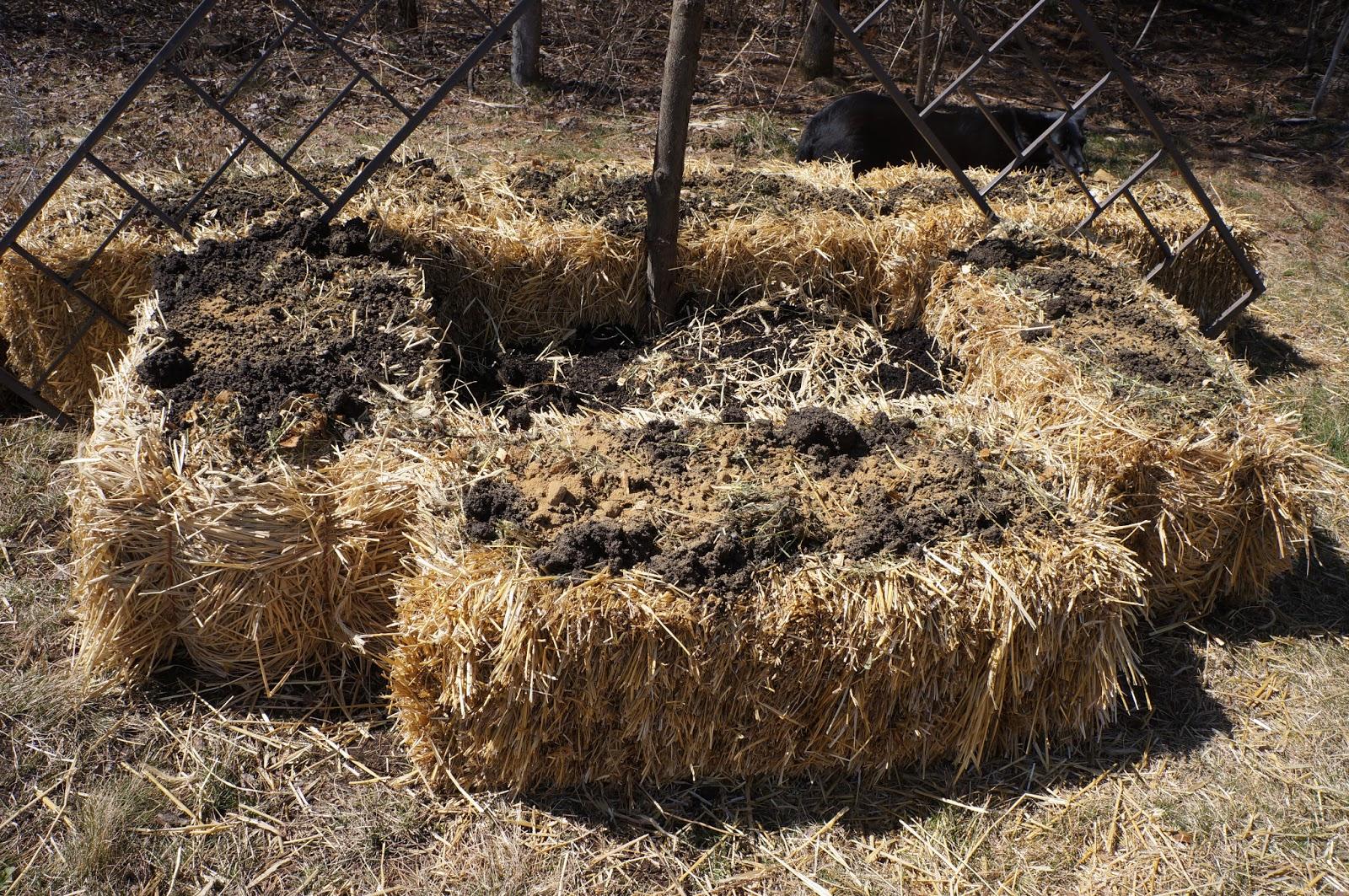 The Backyard Farming Connection: Gardening Methods: Straw Bale Gardening