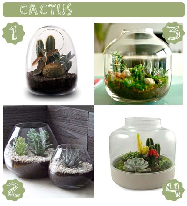 cacti_terrariums_cactus_terrarios_succulent