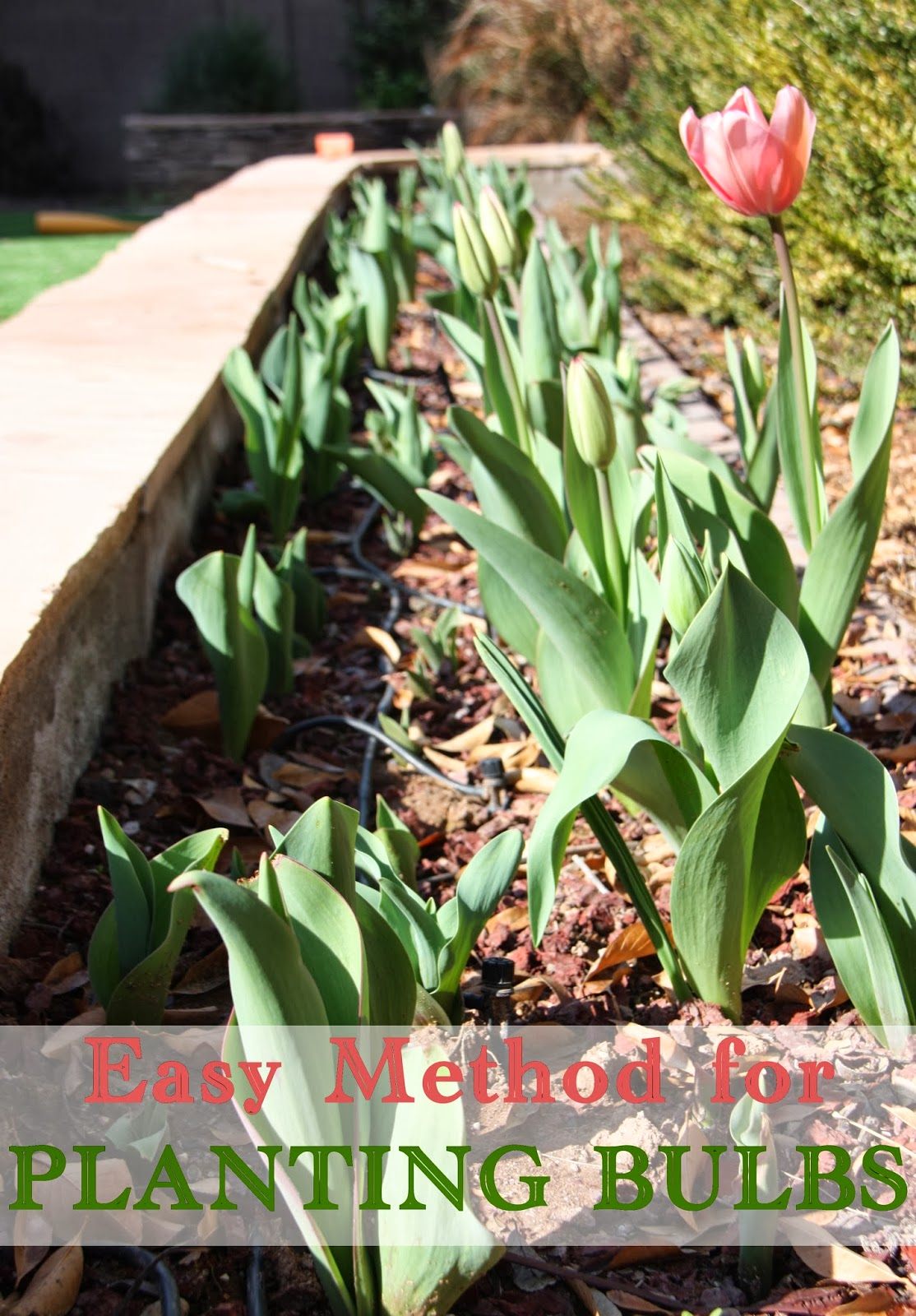 Easy method for planting bulbs
