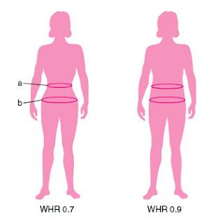 waist-hip ratio (WHR) atau nisbah pinggang-pinggul wanita berkait rapat dengan kecantikan dan kesuburan drp Premium Beautiful Shop