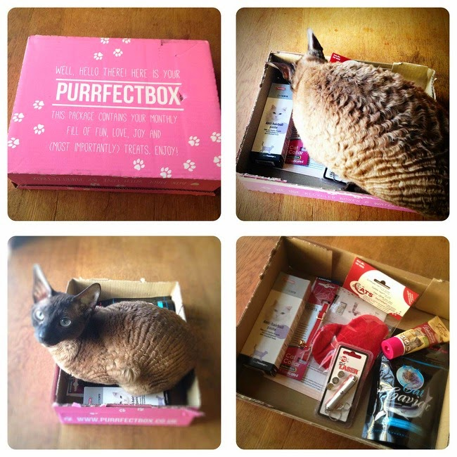 Purrfectbox review