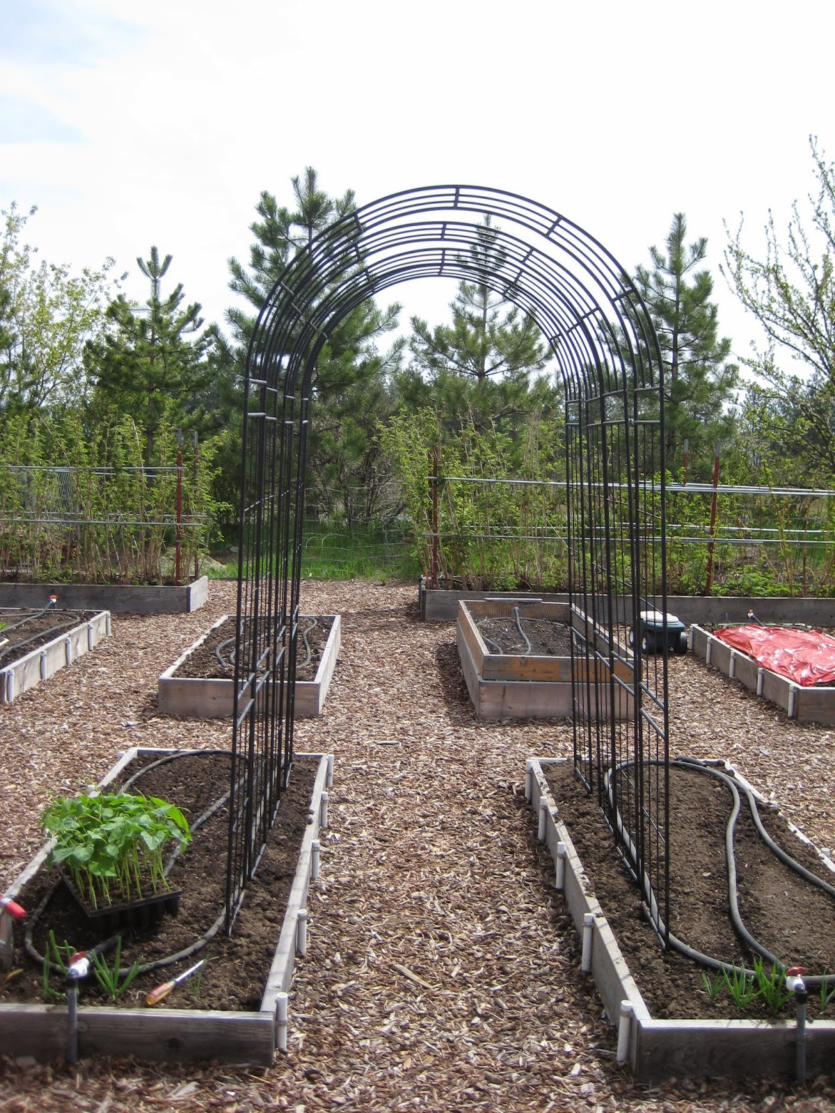 Superior Pole Bean Trellis Ideas Part - 4: Pole Bean Trellis