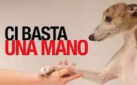 LISTA MARCHI DI PRODOTTI CHE NON TESTANO SUGLI ANIMALI
