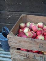 Härliga äppeltider