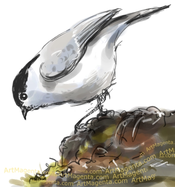 Marsh Tit sketch painting. Bird art drawing by illustrator Artmagenta