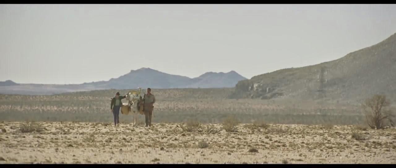 Young ones - Llevando carga en burro