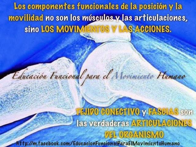 TEJIDO CONECTIVO Y FASCIAS SON LAS VERDADERAS ARTICULACIONES DEL ...