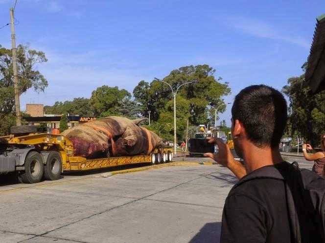 FOTO Pemakaman Pasu 25 Ton di Uruguay