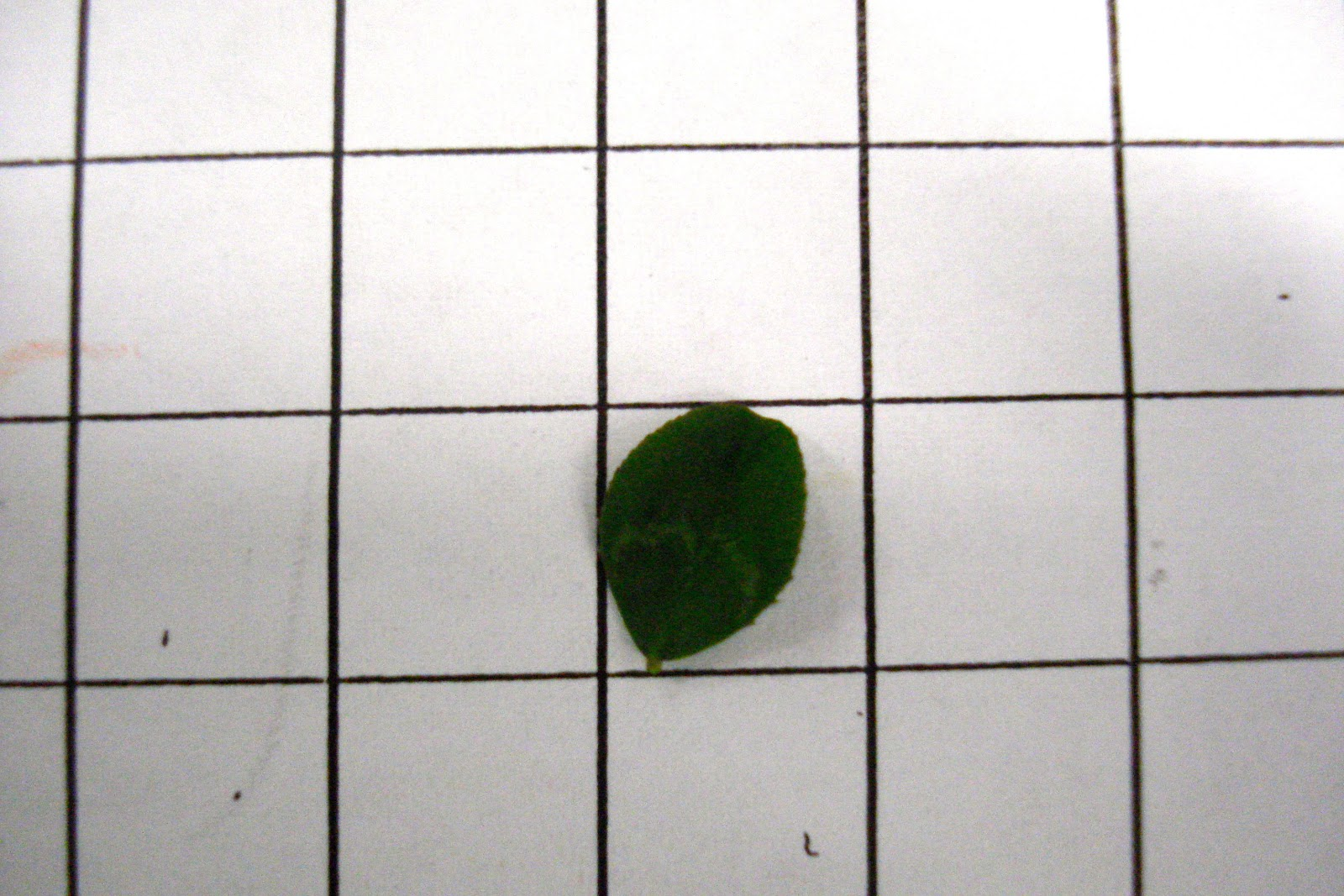 how to find the area of a leaf