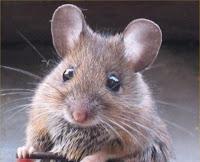 """""""macam-macam tikus"""""""